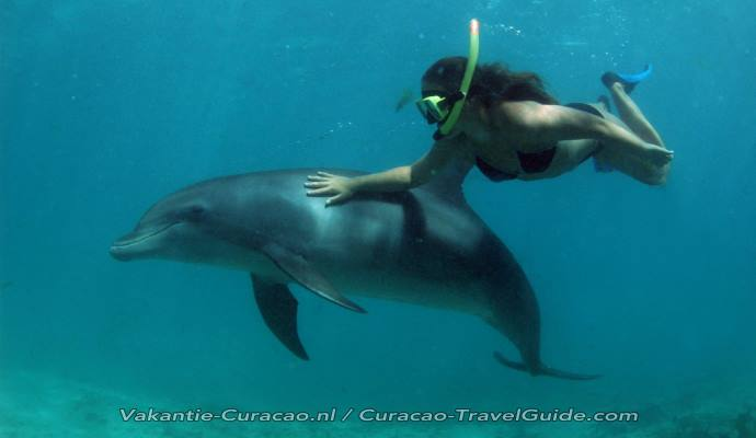 curacao swimming with dolphins