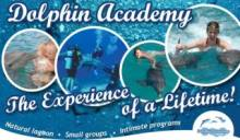 Flyer of Dolphin Academy