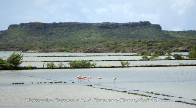 Flamingos at the salt pans of Jan Kok